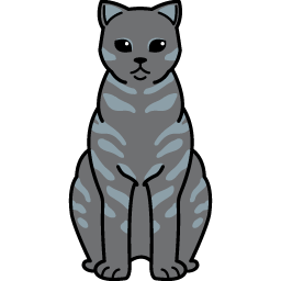 British Shorthair – Smoke