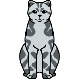 British Shorthair – Tabby