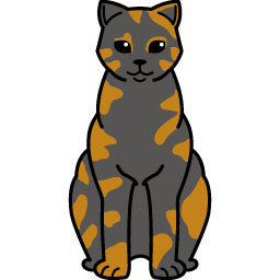British Shorthair – Tortie