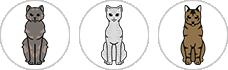 story-au-cats