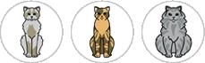 story-wo-cats